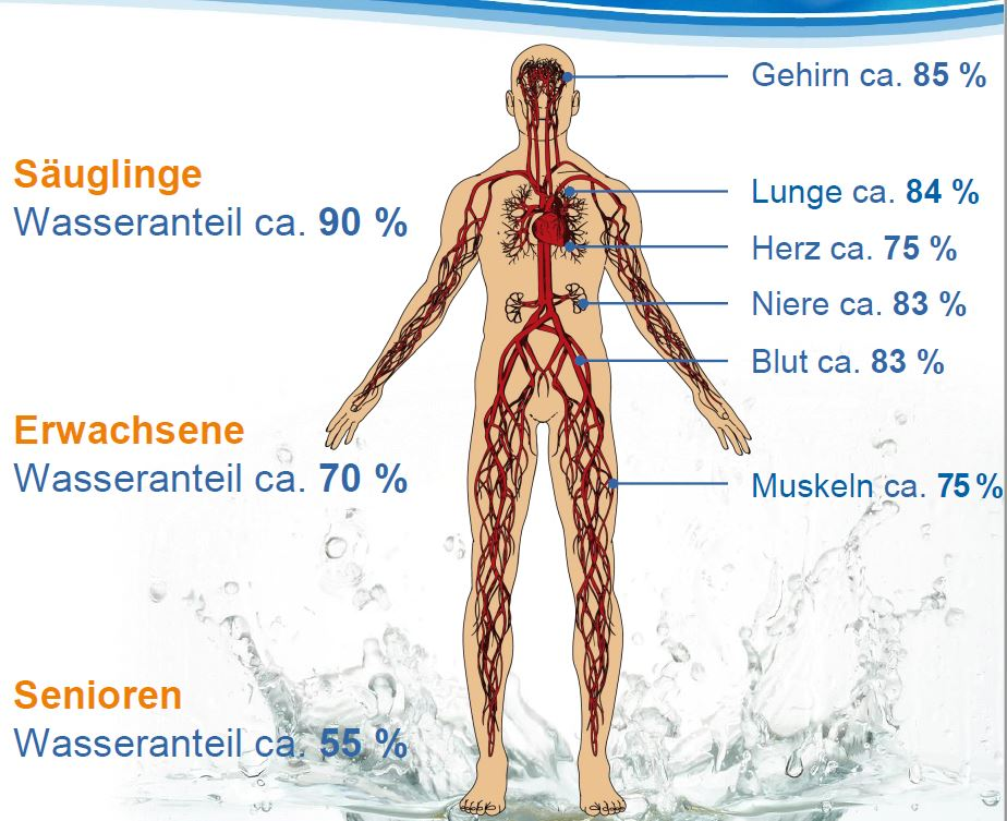 Wasser - Körper - %-Anteile